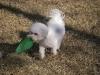 2009_02_07_1701_sagamore_moku_frisbee-8