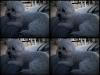 2009_02_07_1701_sagamore_moku_frisbee_iphone-1